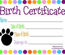 Birth Certificate Project for Kids